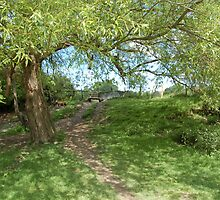 Woodland Path by JImage