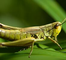 grasshopper macro by peterwey