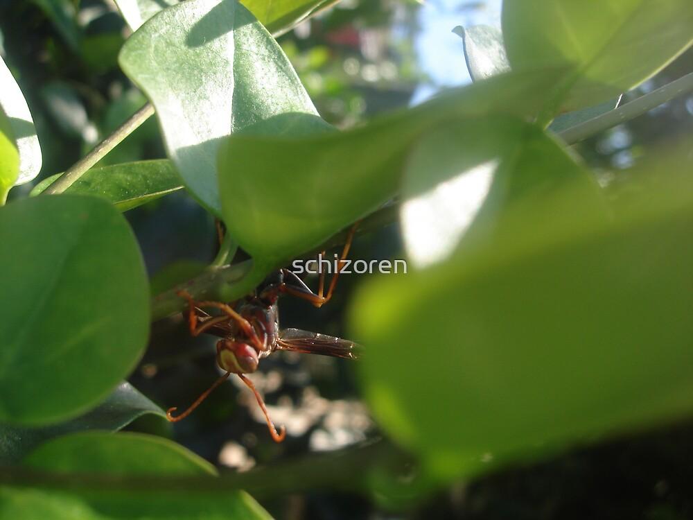 buzz by schizoren