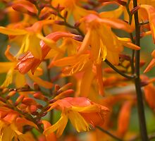Close up of orange flowers by Andrew Stock