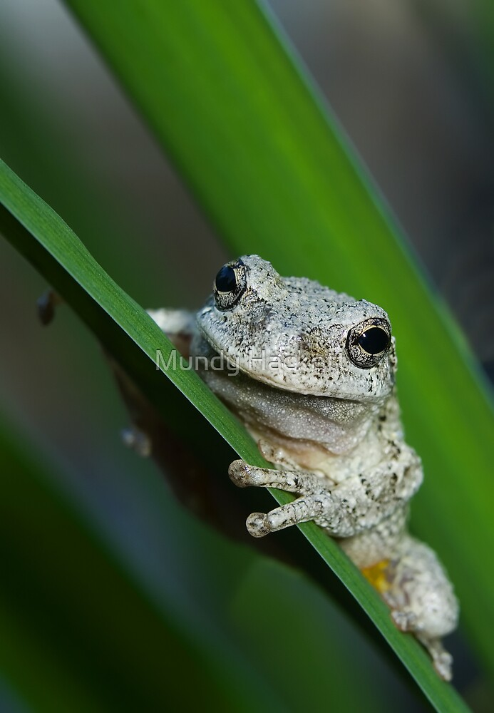 The prince of frogs by Mundy Hackett