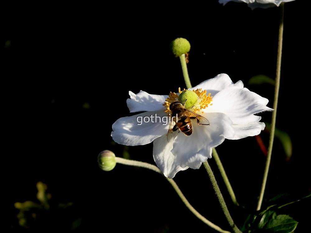 flower worker by gothgirl