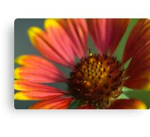 Macro flower. Canvas Print