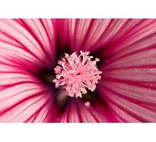 Macro of pink flower Photographic Print