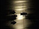 Boats, Elizabeth Bay by John Douglas