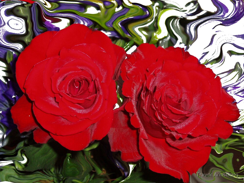 Red Roses by Trevor Armstrong