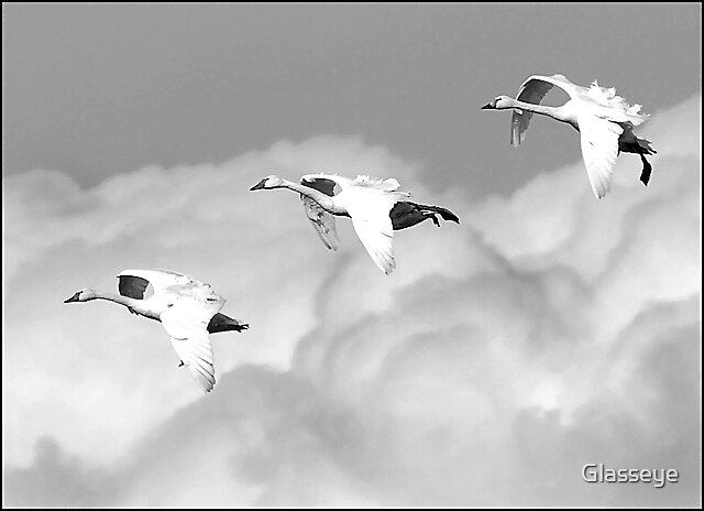 We Three Swans by Glasseye