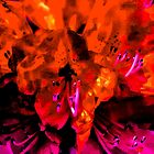 Pink And Orange Camelia Flower Abstract by Ian Mooney