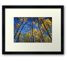 An Aspen Morning Framed Print