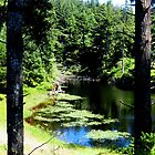 Lilly Ponds.....Waldport, Oregon by trueblvr