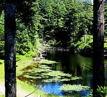 Lilly Ponds.....Waldport, Oregon by trueblvr