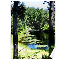 Lilly Ponds.....Waldport, Oregon Poster