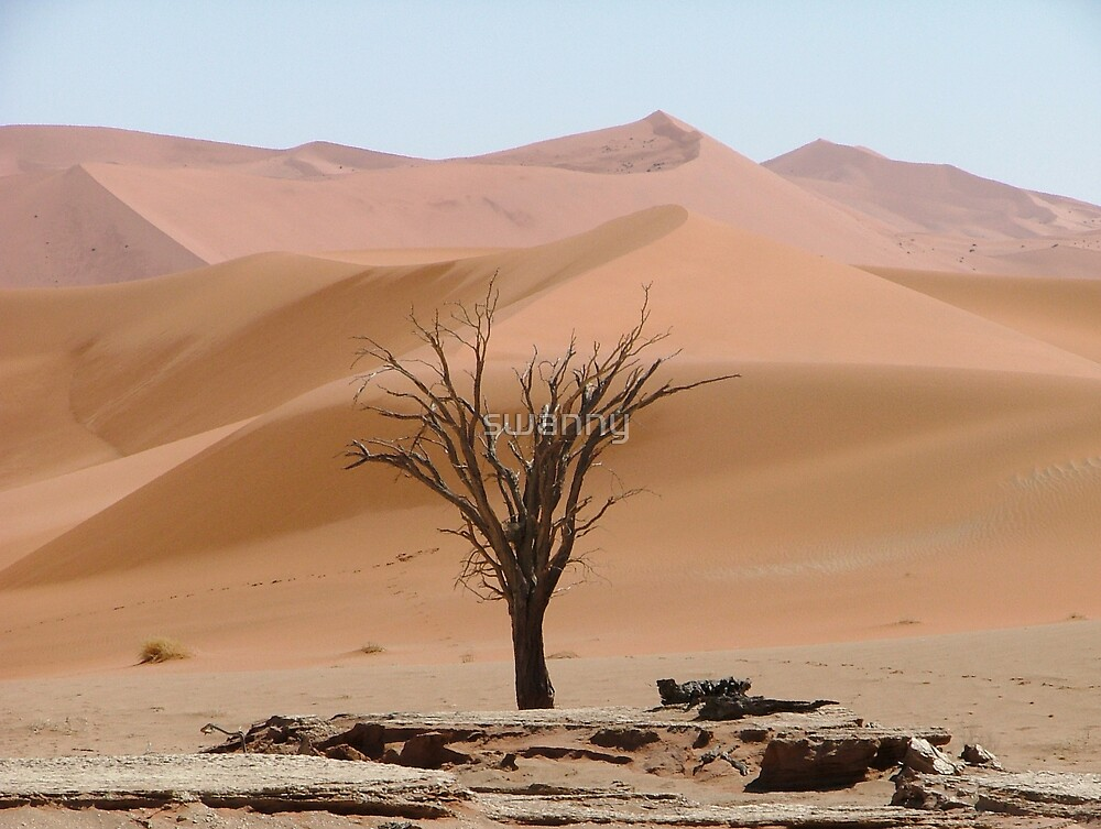 Desert - Namibia by swanny
