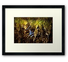 Ripples, reeds, reflections Framed Print