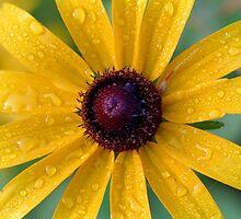 Daisy by markophoto