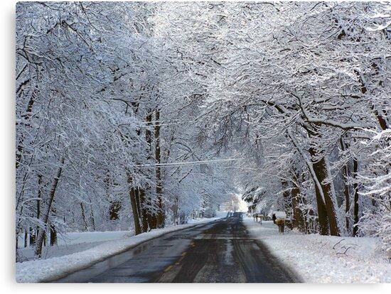 Winter Wonderland by Maria Dryfhout