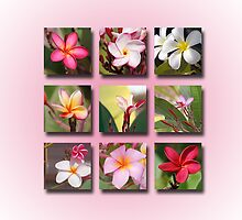 Plumeria Portfolio by Bonnie T.  Barry