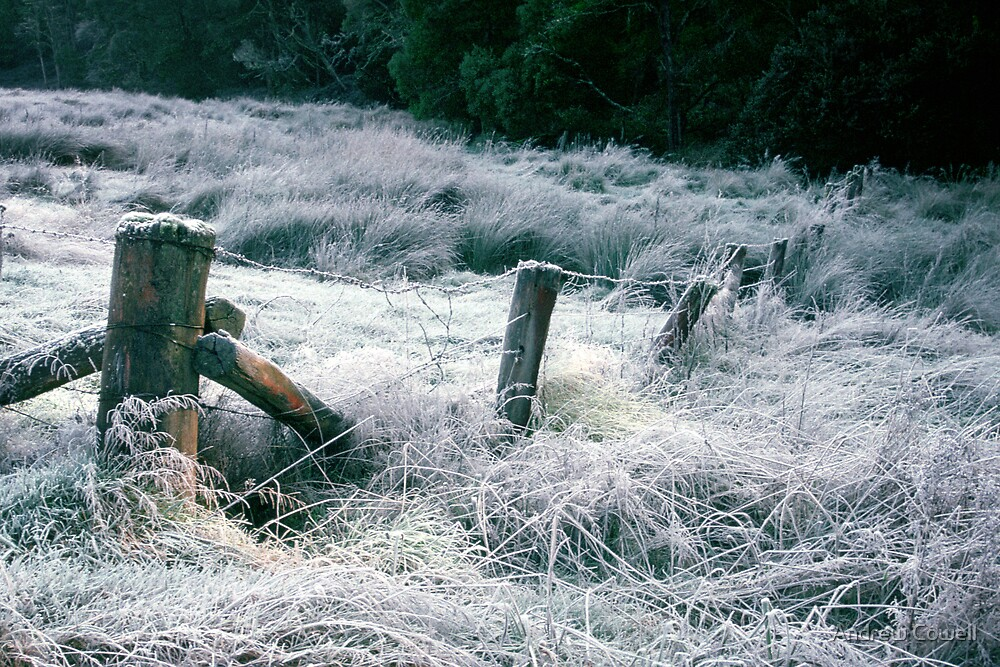 morning frost by Andrew Cowell