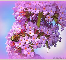 Bumble on a Butterfly Bush by Deb  Badt-Covell