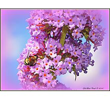 Bumble on a Butterfly Bush Photographic Print