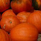Pumpkins by Sherri Hamilton