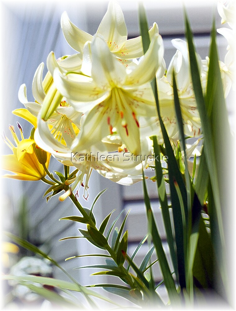 Daylillies by Kathleen Struckle
