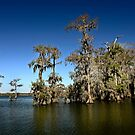 A clear day on Lake Martin by cclaude