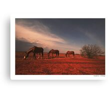 The daily battle for the life Canvas Print