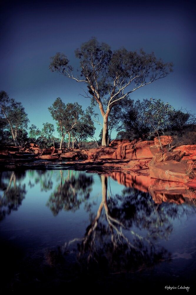 River Red Gum by Federico Colalongo