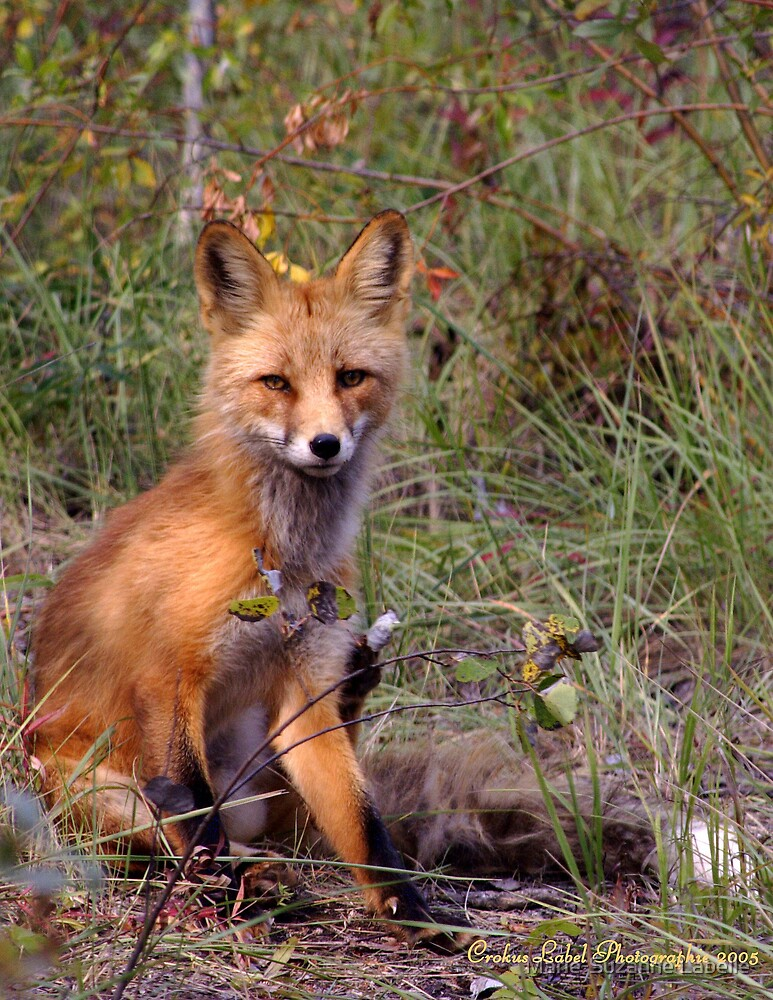 Foxy, Looks by Crokuslabel