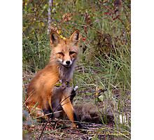 Foxy, Looks Photographic Print