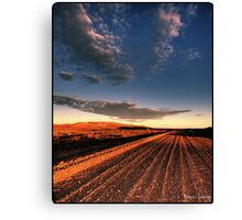 A dirty road in the outback Canvas Print