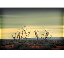 The dance of the trees Photographic Print