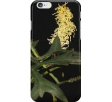 Grevillea flexuosa iPhone Case/Skin
