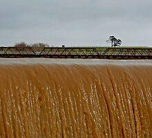 Low Bridge by Jason Adams