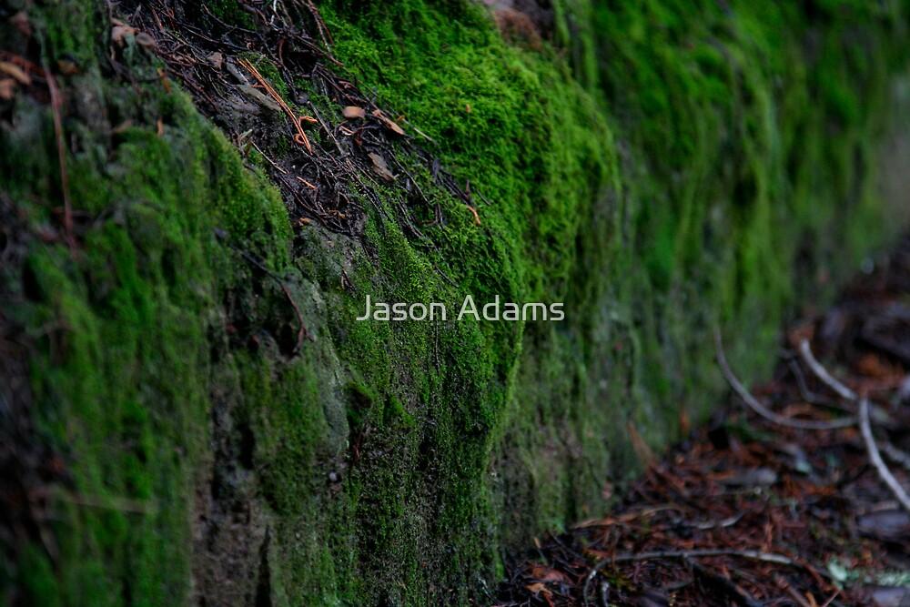 Moss by Jason Adams