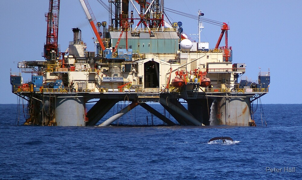Diving humpback near oil rig by Peter Hall