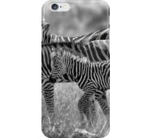 ZEBRA FAMILY IN BLACK & WHITE -  BURCHELL'S ZEBRA – Equus burchelli – Bontkwagga iPhone Case/Skin