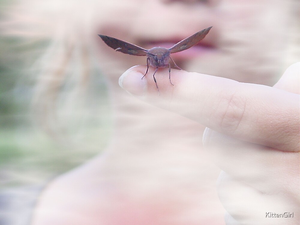 From  in the fog comes ... a moth by KittenGirl