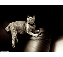 Mrs Gato Photographic Print