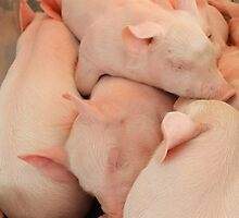 Pile of Piglets by Janet Rymal