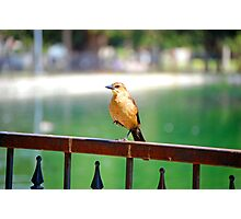 ballerina bird Photographic Print