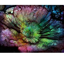 Rainbow touch rustic flower Photographic Print