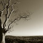 Tree overlooking Valley by Bernd Tschakert