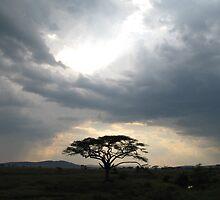 Serengeti by Bethanie