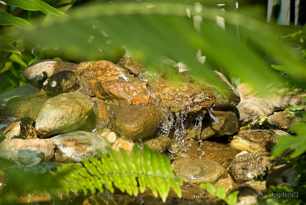 A Pond by clogden21