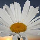 Flower by Cherax