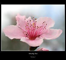 Delicately Pink by krezmo