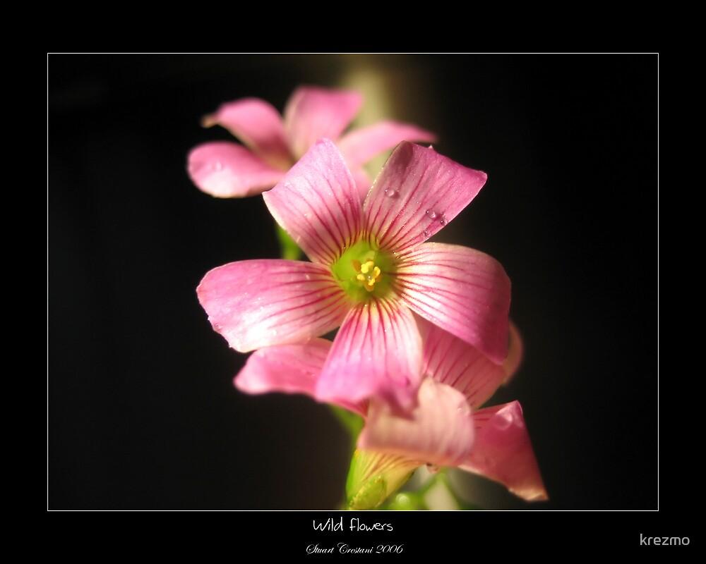 Wild Flowers by krezmo