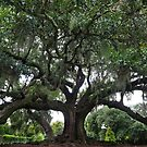 The Tree of Life - New Orleans, LA by Daniel  Rarela